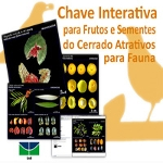 Fruits of the Brazilian savanna attractive to wildlife