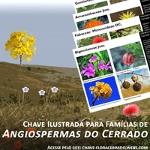 Plant families of the Brazilian savanna
