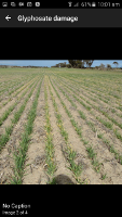 MyCrop Wheat App - Crop                     Damage