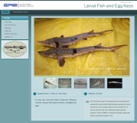 Larval Fish and Egg Key