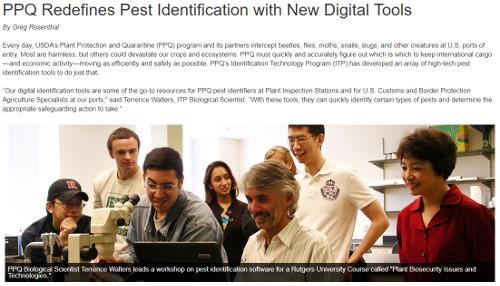 PPQ Pest Identification Article