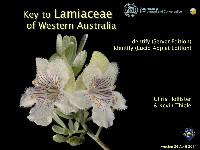 Key to Lamiaceae of Western Australia