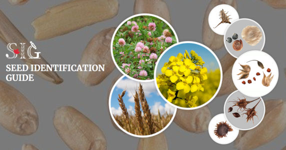 Seed Identification Guide