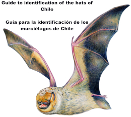 Guide to identification of the bats of Chile