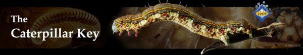 The Caterpillar Key