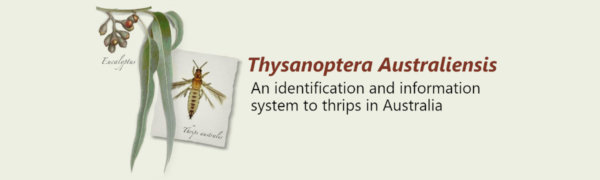 Two new thrips keys: Thysanoptera Australiensis & Pest thrips in Timor Leste